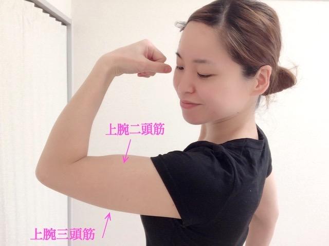 二の腕の筋肉部位