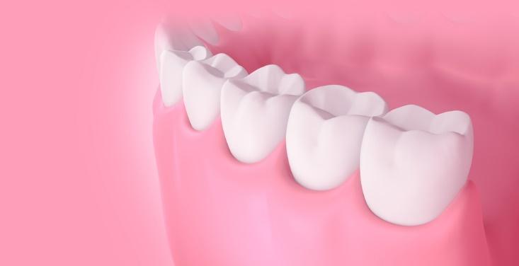 歯と歯ぐきの画像