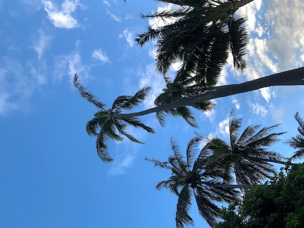 ハワイの青空とヤシの木