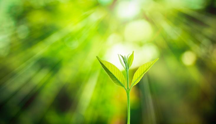 光に向かって伸びる植物の画像