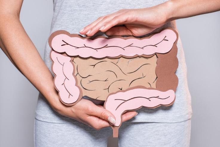 胃腸のイラストをお腹のあたりで掲げる女性の画像