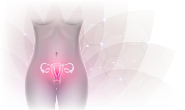 子宮のイメージカット