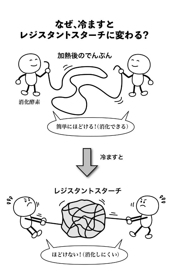 デンプンがレジスタントスターチに変化する過程を示したイラスト