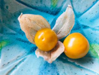 見た目はミニトマトに似てるけど…。新感覚な秋の味覚「食用ほおずき」を食べてみた  #週末よもやま