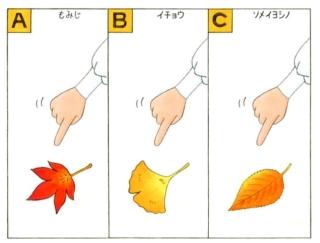 【心理テスト】紅葉している葉っぱを発見! それは何の葉っぱだった?
