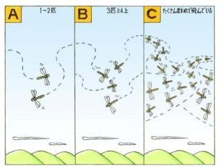 【心理テスト】トンボが飛んでいます。全部で何匹いる?