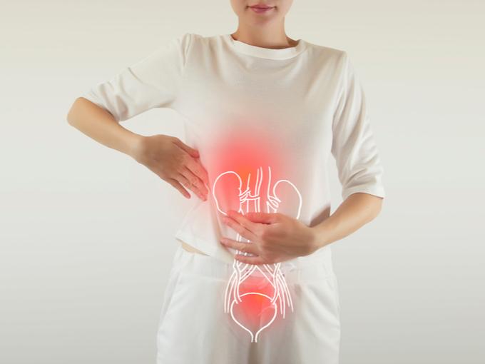 腎臓の場所を示した画像