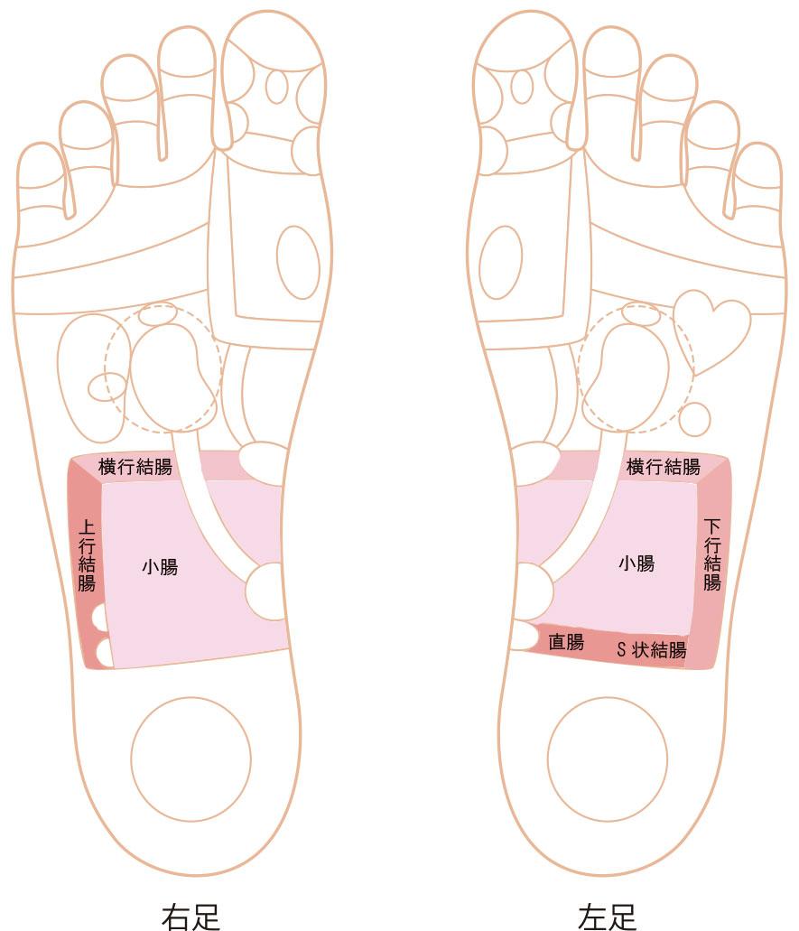 腸の反射区イラスト画像