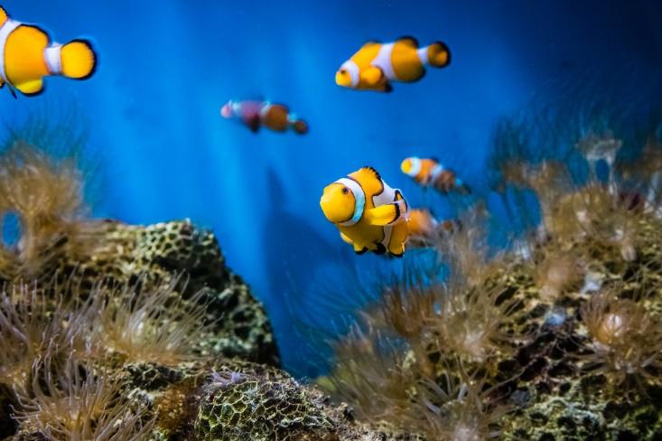 水槽の中の魚の画像