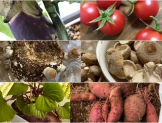 マンション住まいでもできる! プランター栽培やしいたけ栽培 #Omezaトーク