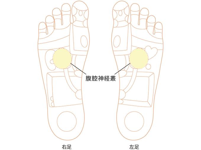 腹腔神経叢反射区のイラスト画像
