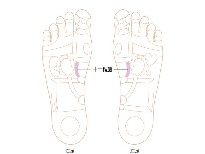 十二指腸反射区の画像