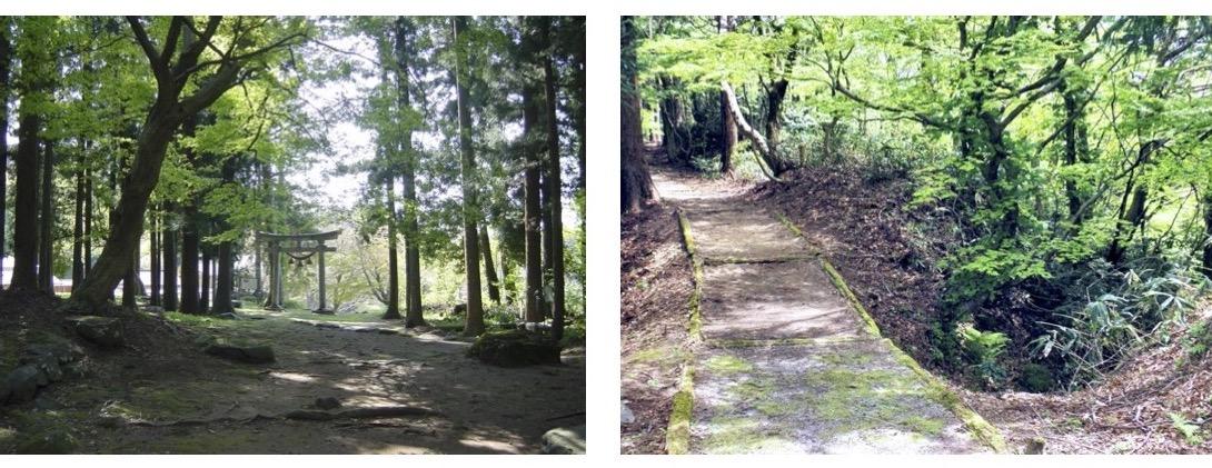 緑の中の鳥居と山道
