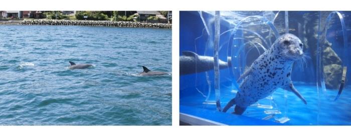 野生イルカと水族館のアザラシ