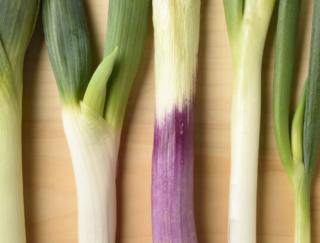 [ネギの種類]焼き物から鍋物まで、料理で品種を使い分けよう!