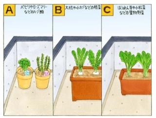 【心理テスト】ベランダで野菜を育てます。あなたが選ぶのは?