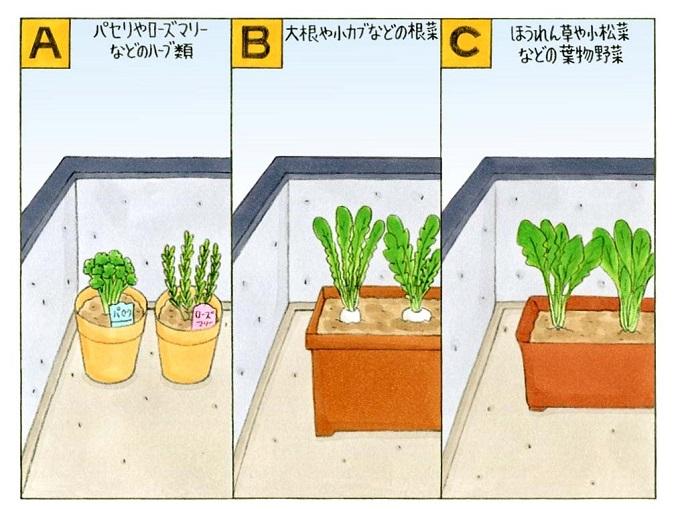 ベランダで育てている野菜のイラスト