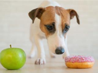 りんごとドーナツを前に品定めする飼い犬