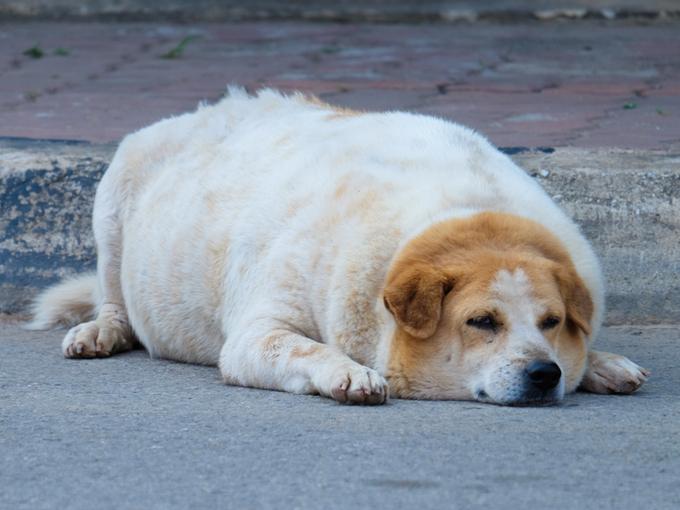 道路に寝そべる飼い犬