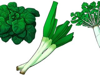 大根などの冬野菜が甘くておいしいのはなぜ?野菜の糖度を解説