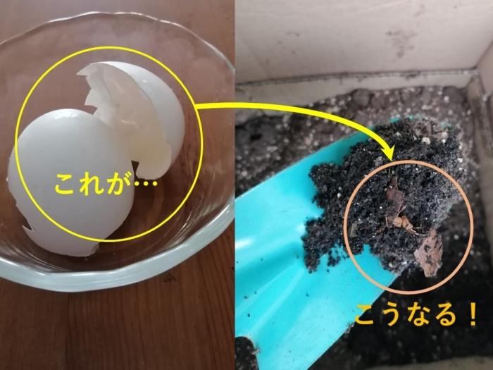 卵の殻と土の画像