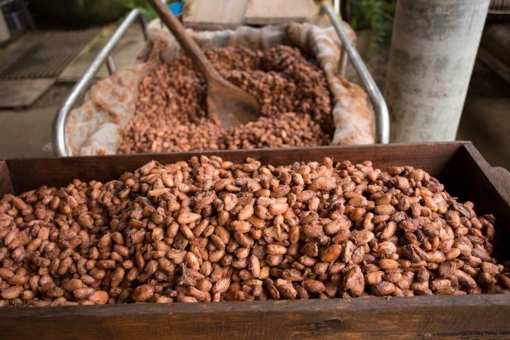 発酵後のカカオ豆の画像