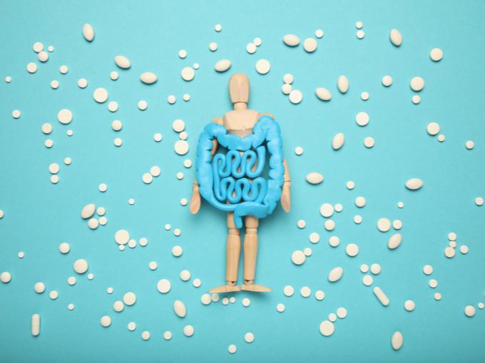 腸と人の模型