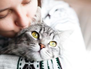 猫アレルギーは治せるかも! 海外研究で報告された免疫反応を穏やかにする方法とは