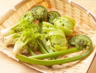 「うど」「ふきのとう」「たらの芽」「うるい」の中で、アク抜きが必須の山菜はどれ?~ダイエットに役立つ栄養クイズ~