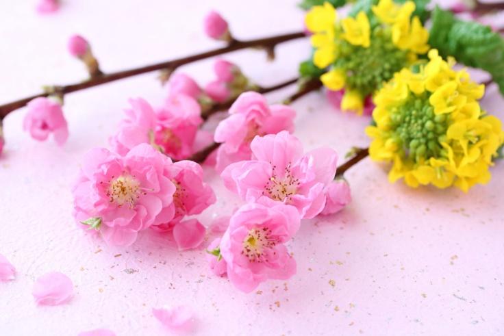 桃の花画像