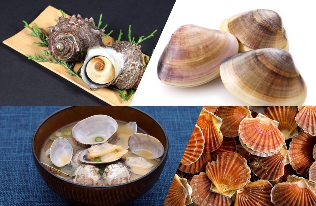 貝類の画像
