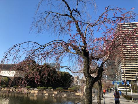 皇居近くの木々