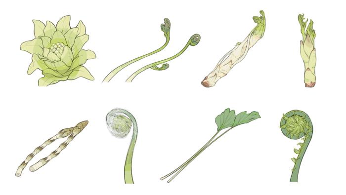 [山菜の栄養]ふきのとうやワラビなど種類によってこんなに違う