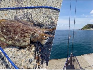 初心者でも楽しめるルアーフィッシング!  防堤釣りで「イカ」が釣れた! #Omezaトーク