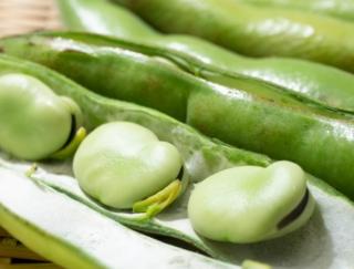 グリンピース、スナップえんどう、そら豆、枝豆の中で、いちばんカロリーが高いのは?~ダイエットに役立つ栄養クイズ~
