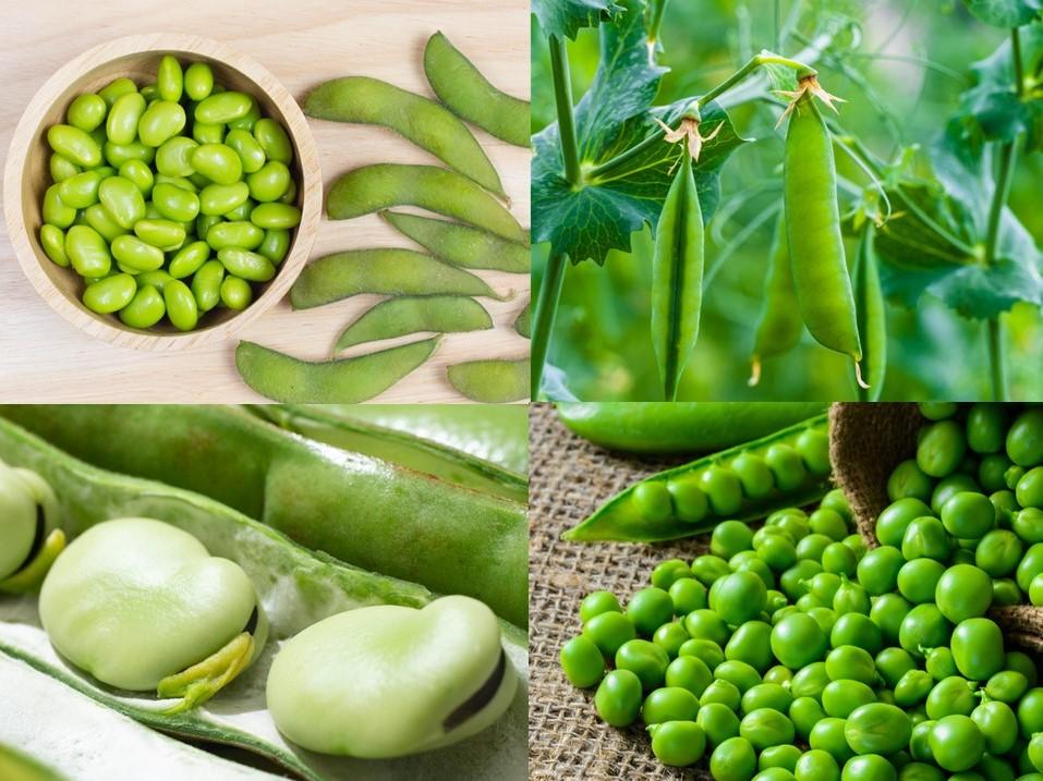 マメ科野菜の画像