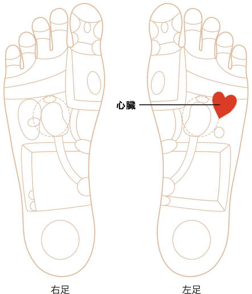 心臓の反射区画像