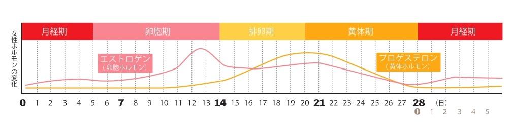 月経の変化グラフ