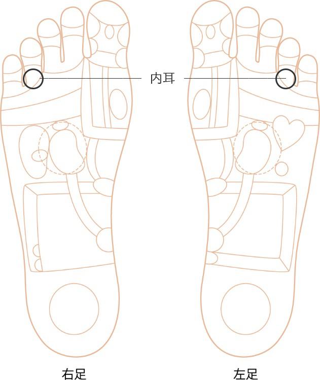 内耳の反射区画像
