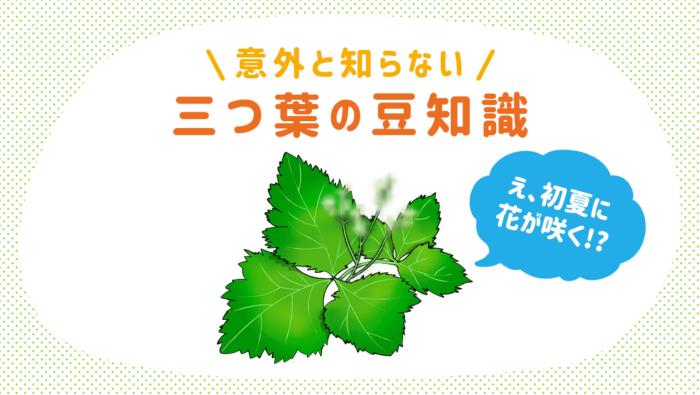 三つ葉の栄養や、花が咲く、3種類あるなど、意外な豆知識まとめ