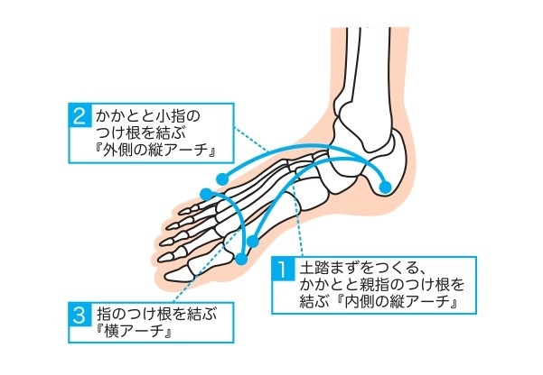 イラスト①足のアーチ前編流用
