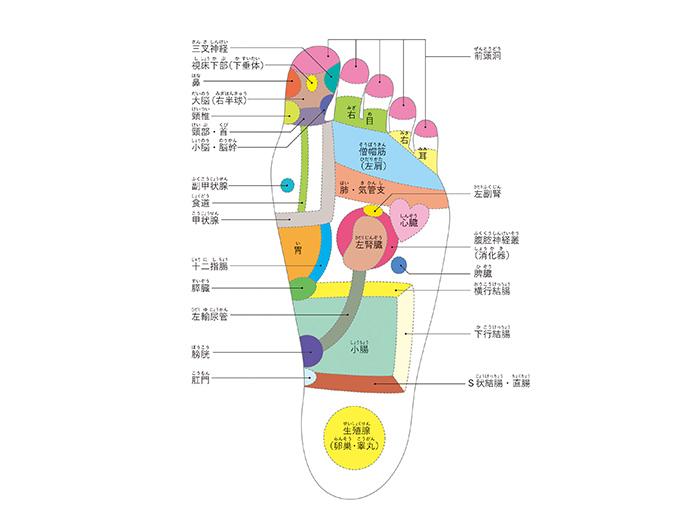 左足裏ゾーンマップ
