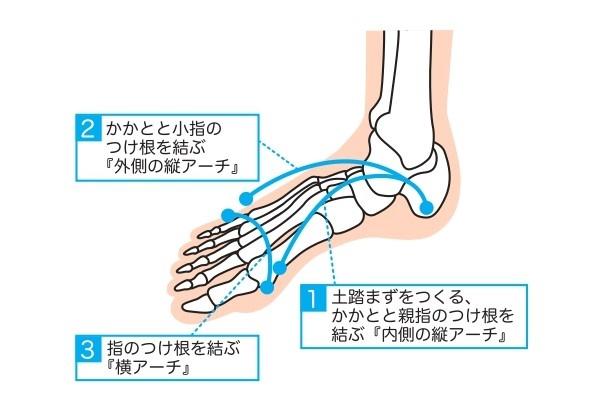 足のアーチ(修正済み)イラスト画像