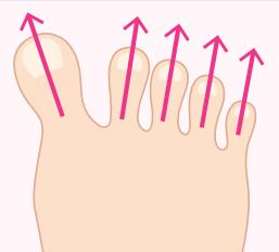 V字に広がる指イラスト画像