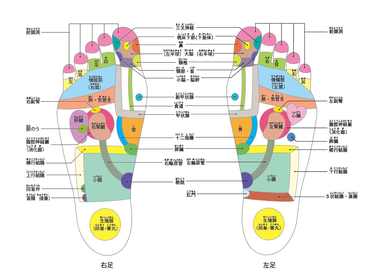 足裏のゾーンマップ