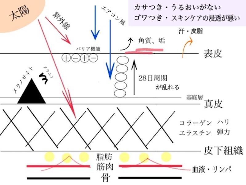 肌のバリア機能の仕組み図