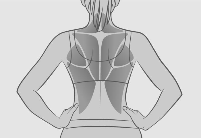 背中の筋肉をイメージしたイラスト